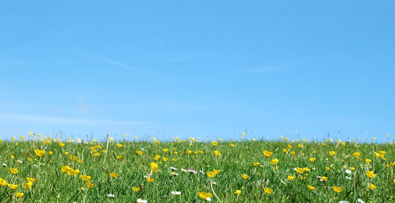 Sunny field with a blue sky